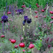 The Laurent -Perrier Garden - Designed by Luciano Giubbilei - Chelsea Flower Show