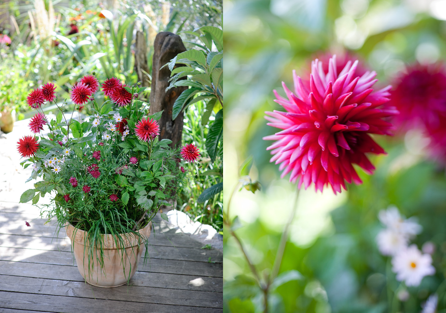 Container Gardening   Jason Ingram   Bristol Photographer ...