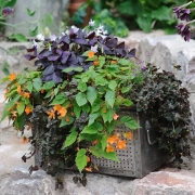 BBC Gardeners' World Magazine - All Weather Containers - Designed by : Lisa Buckland