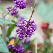 BBC Gardeners' World Magazine - Seasonal Containers - Designed by : David Hurrion