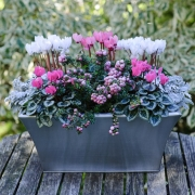 Which? Gardening - Winter Containers - Designed by : Bob Purnell