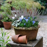 Which? Gardening - Autumn Containers - Designed by : Bob Purnell