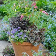 Which? Gardening - Spring Containers - Designed by : Bob Purnell