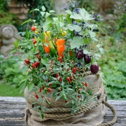 Which? Gardening - Edible Containers - Designed by : Bob Purnell