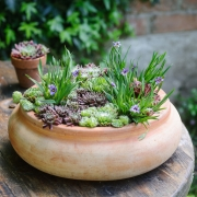Which? Gardening - Alpine Containers - Designed by : Bob Purnell