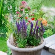 BBC Gardeners' World Magazine - Meadow Containers - Designed by : Matthew Wilson