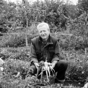 Charles Dowding Harvesting Parsnips