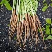 Kitchen Garden Experts - L'Enclume