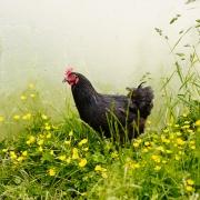 Kitchen Garden Experts - The Felin Fach Griffin