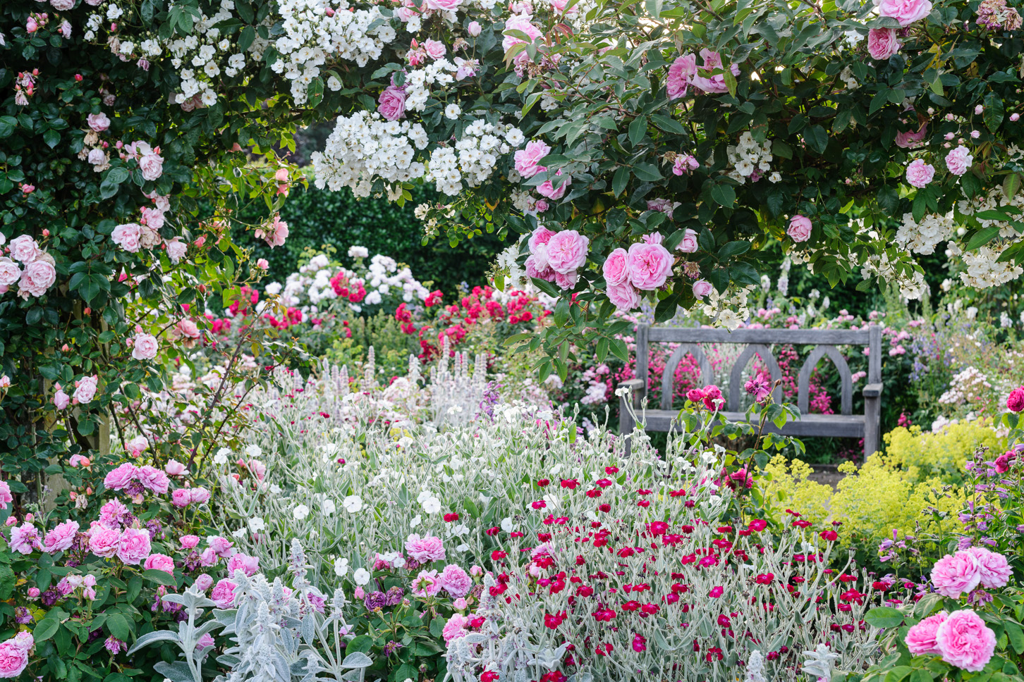 Roses In Garden: RHS Garden Photography