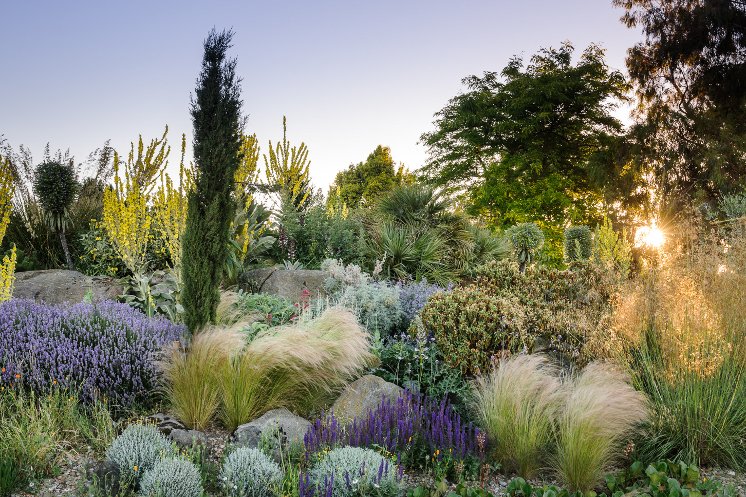 RHS Hyde Hall - Dry Garden, General view with spikes of  Verbascum, Stipa tenuissima, Echiums, Eschscholzia californica, Salvia, Stipa Gigantea,  lavender and Verbena bonariensis