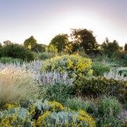 RHS Hyde Hall - Dry Garden