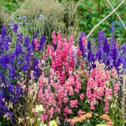 The Cut Flower Patch by Louise Curley